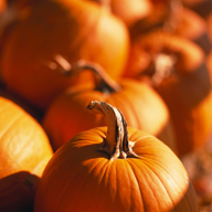 Pumpkin – Fall's best treat