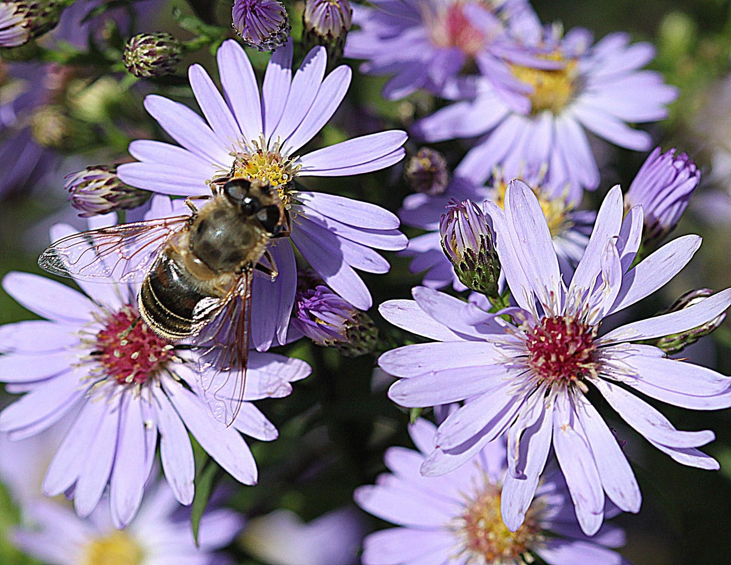 Nature's wonder – bees!