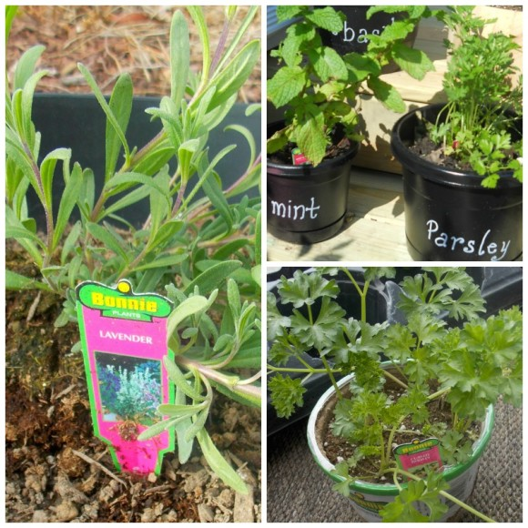 Five essentials for a Mother's Day herb garden